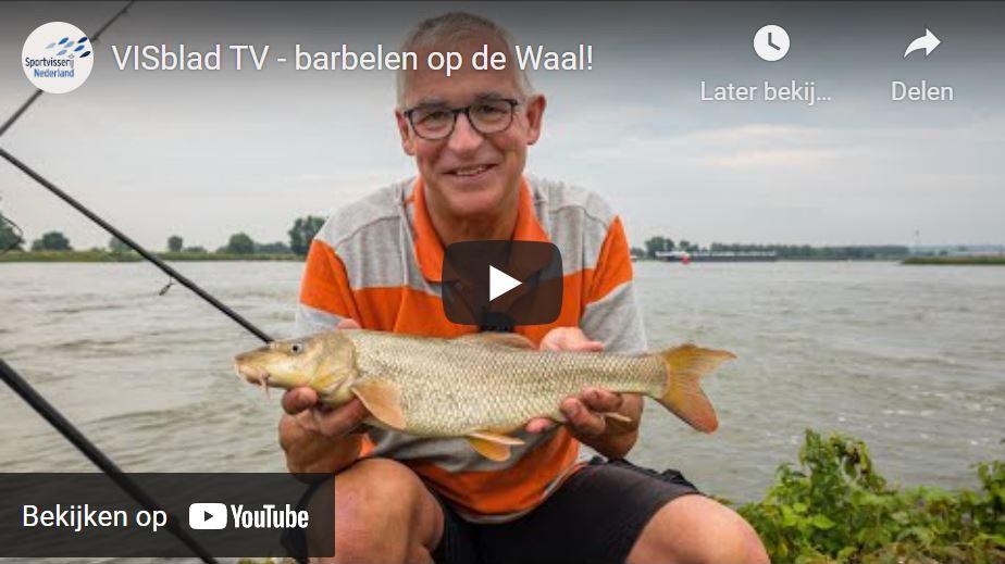 Barbeelvissen in VISblad TV (video)